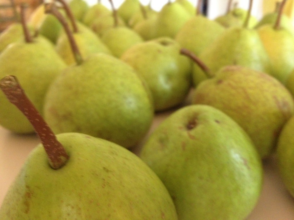 Homegrown pears